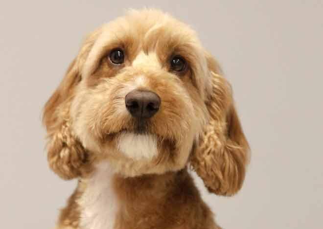 Charlie Dog