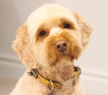 Lola Dog Services